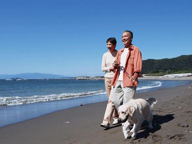 シニア優待プランで愛犬と西伊豆旅