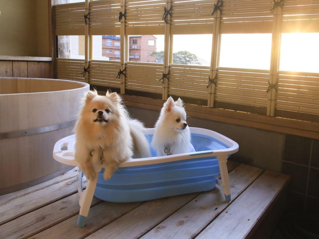 人気の露天風呂付き客室も…!