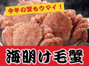 海明け毛蟹