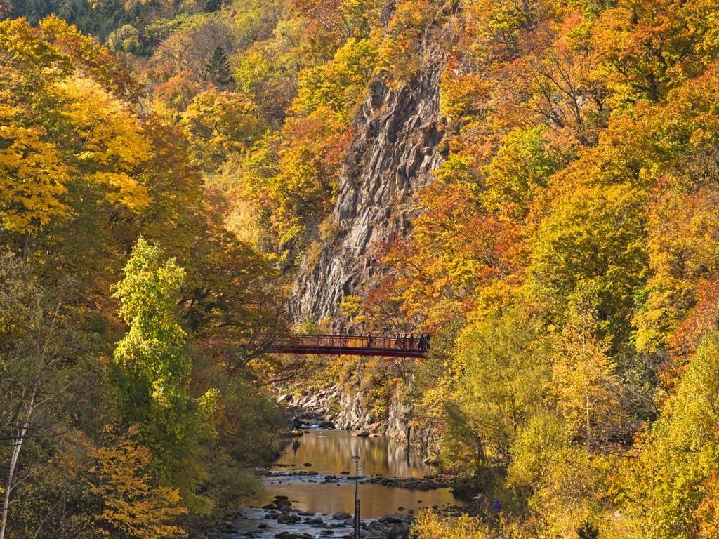 【秋の定山渓】客室から紅葉に染まる渓谷をお楽しみください。