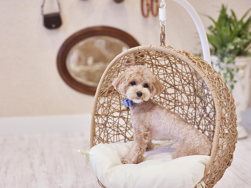 ★ペット同伴ルーム★【基本】旧軽井沢に愛犬も嬉しいResort&Pet Hotelで寛ぐひと時(小~大型犬まで可)