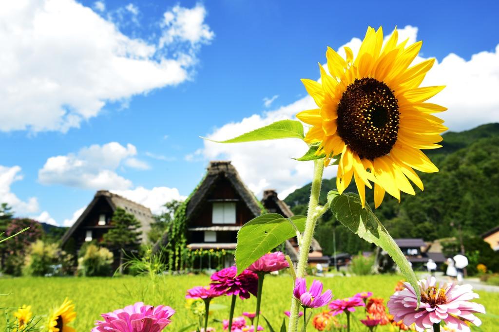 【景観】夏の合掌造り