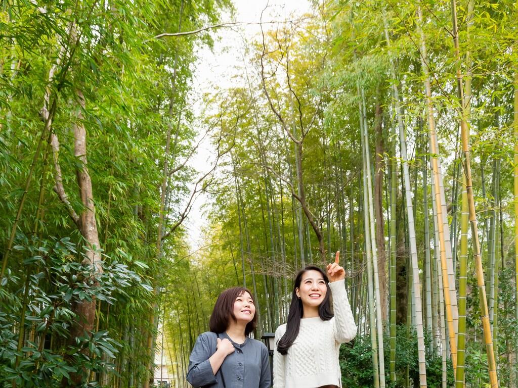 竹林の小径イメージ