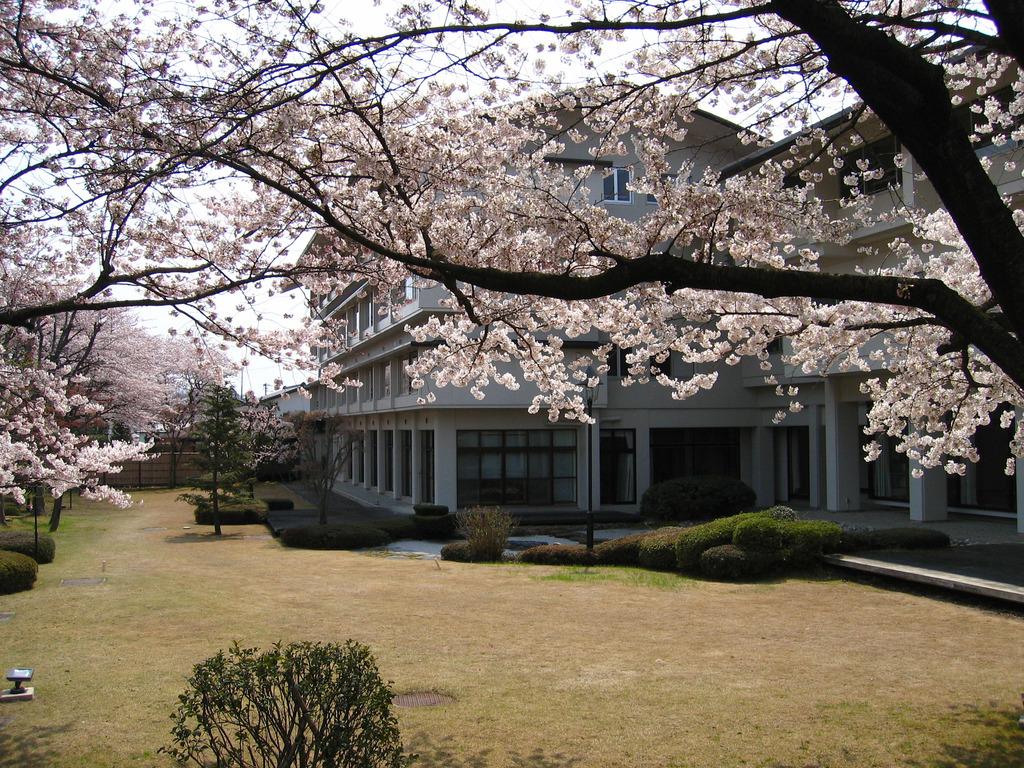桜咲く庭園
