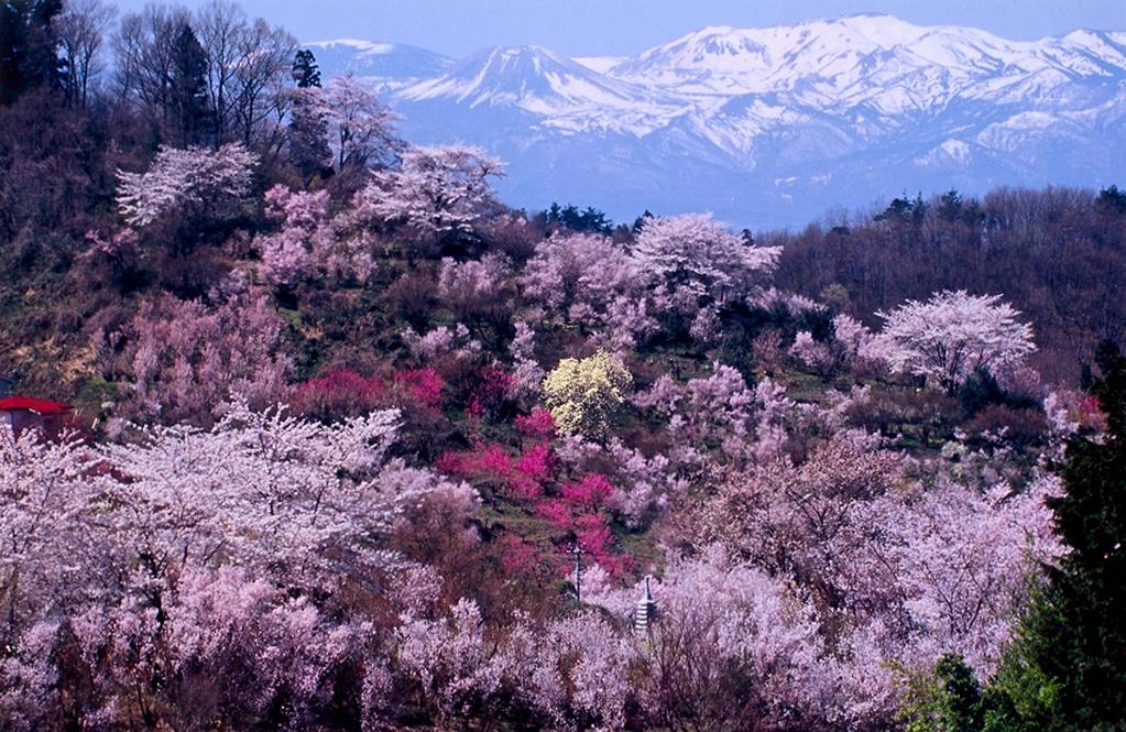 幻想的でさえある花見山