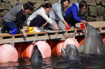 【くじらの博物館入館付】イルカのエサやり体験もできる♪家族旅行におすすめ!!バイキングプラン画像