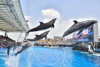 【名古屋港水族館入館券付き】 ☆涼を求めて☆彡 夏休みは家族で水族館へ行こう♪