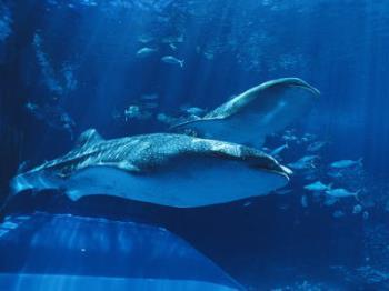【美ら海水族館チケット付】神秘に満ちた沖縄の海を感動体験!(朝食付)