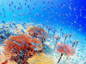 【サンゴ再生プロジェクト】サンゴ苗作り体験付き~沖縄の美しいサンゴを拡げませんか(ブッフェ朝食付)