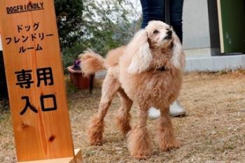 【ペット同室‐1泊2食】小型犬~中型犬 愛犬を自由に放せる和洋室~ドッグフレンドリールーム~モニター宿泊プラン