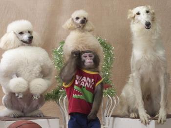 お猿とワンちゃんによる華麗なショー★スーパードッグ&モンキーサーカス【しんりんダイニングバイキング】