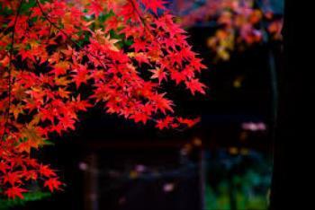 【事前カード決済】秋の京都旅プラン<朝食付き>【変更・返金不可】