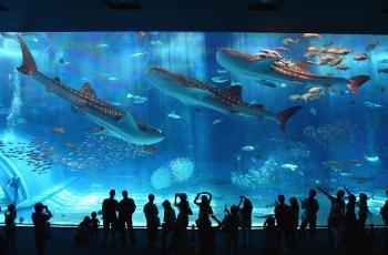 【美ら海水族館】は必ず行きたい☆滞在するほど楽しさ倍増♪アクアリウムプラン≪朝食+入場券付≫2泊以上