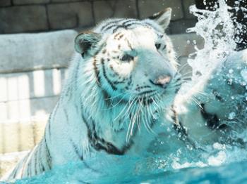 【ワンデーパスおとな2枚】東武動物公園チケット付プラン【GOTOトラベル対象】
