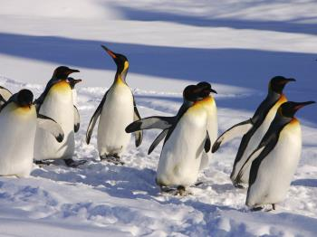 【ペンギンのお散歩】旭山動物園往復無料シャトルバス&入園券付らくらくプラン(朝食付)