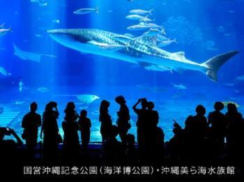 【美ら海水族館】一度は行ってみて♪沖縄美ら海水族館チケット付☆彡(食事なし)