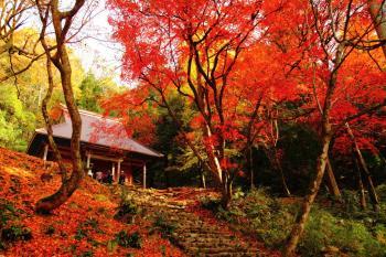 【ファミリー】滋賀へ行こう!秋の行楽ファミリープラン♪