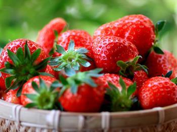 【赤の宝石☆いちご狩り】いちご収穫体験付き♪フレッシュないちごを食べ比べ!太陽の恵みに舌鼓