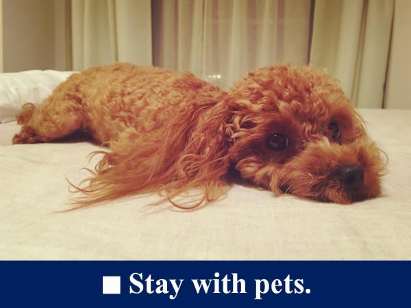 【ペット可】【駐車場確約】■『愛犬も立派な家族』~お部屋で愛犬と過ごす博多泊~