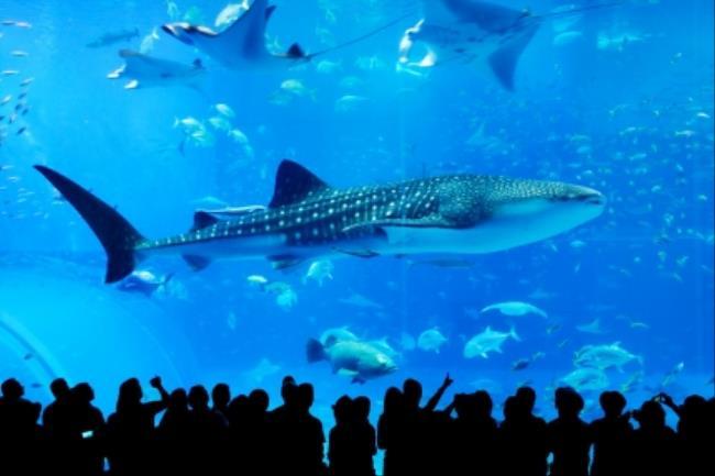 【大人気!水族館チケット付】水族館もビーチも堪能☆美ら海(ちゅらうみ)プラン≪朝食付≫