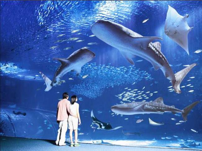 【美ら海水族館チケット付】沖縄の海、美しい魚たちの世界を一望 <朝食付>