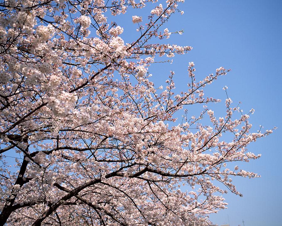黒崎の鼻付近の美しい風景。