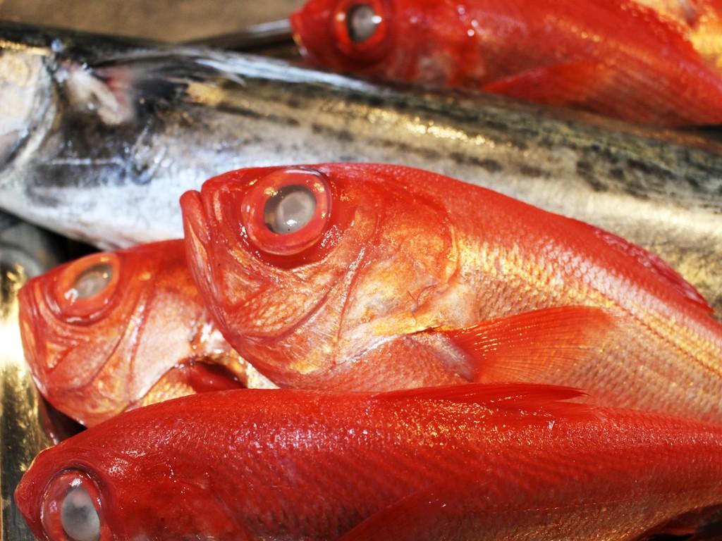 たっぷりと脂ののった地元漁港で水揚げされた新鮮金目鯛をご賞味くださいませ!