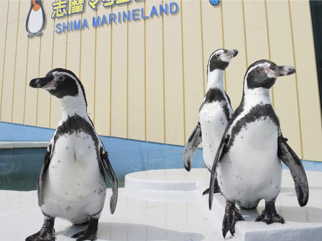 志摩マリンランドの玄関口ではかわいいペンギンたちがお出迎え!