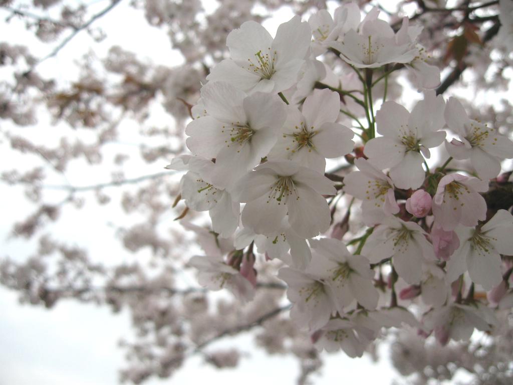 春はそこまで♪