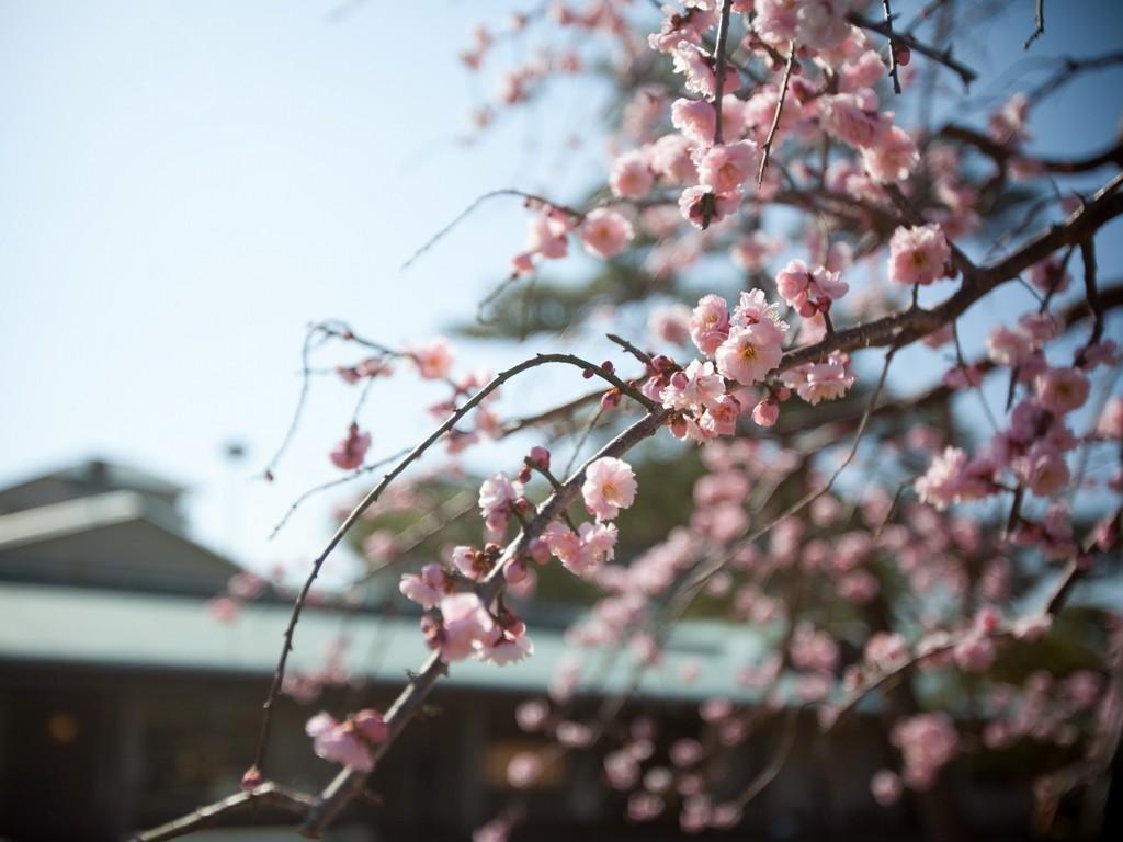 2月 玄関先の梅