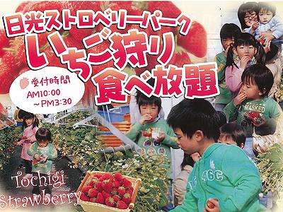 栃木の名産「とちおとめ」の食べ放題をご賞味あれ♪