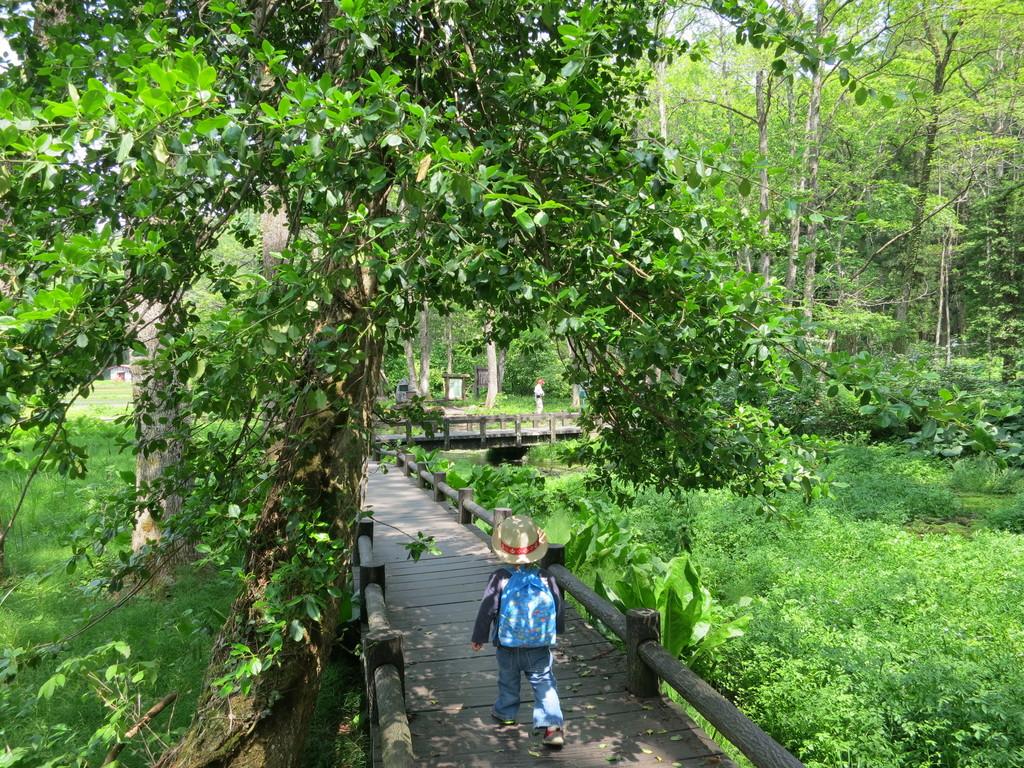姫川源流 遊歩道が整備されているので、マイナスイオンをたっぷり浴びながら気持ちよく歩けます。親海湿原と合わせてゆっくり全周すると1時間くらいのコースです。