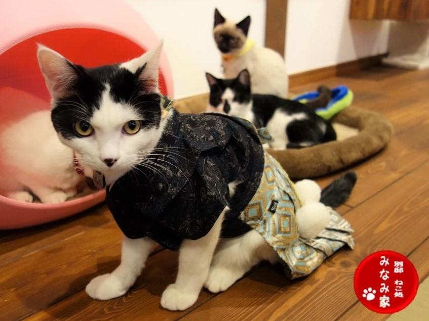 2017全国の宿 人気看板猫ランキングで入賞した殿クンとその仲間たち。