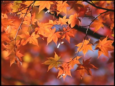 秋の紅葉 ファミリープラン 家族やカップルでご利用下さい
