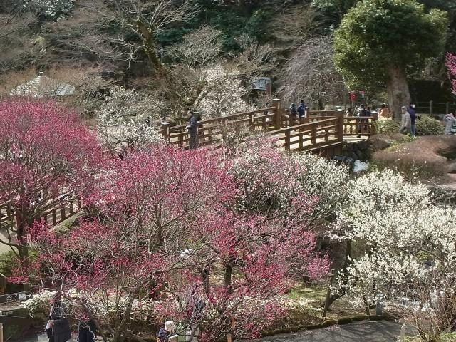 姉妹館「海石榴」の散策路では四季の移り変わりを間近に感じられます。山翠楼ご宿泊の方もご利用いただけます。