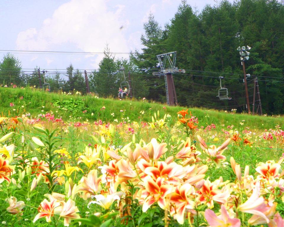 夏のタングラム「ゆり園」