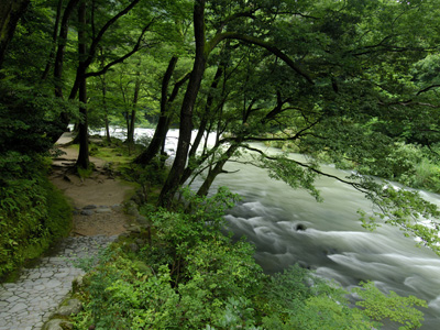 マイナスイオンたっぷりの鶴仙渓で森林浴。