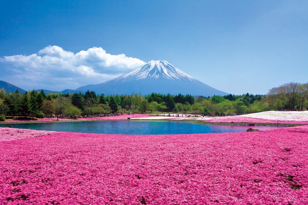 富士芝桜まつり会場(イメージ)