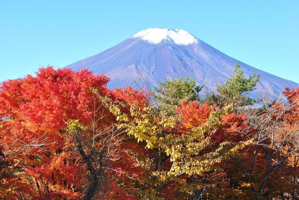山中湖の紅葉と富士山(10月下旬の様子)