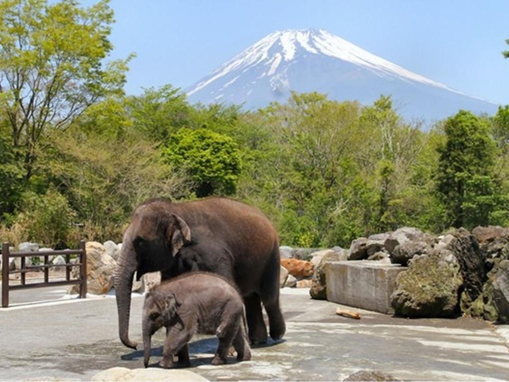 大迫力の動物たちを目の前で堪能できる富士サファリパーク♪