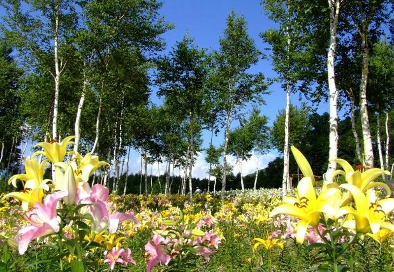 塩原温泉の夏のおすすめ!!ハンターマウンテンゆりパーク