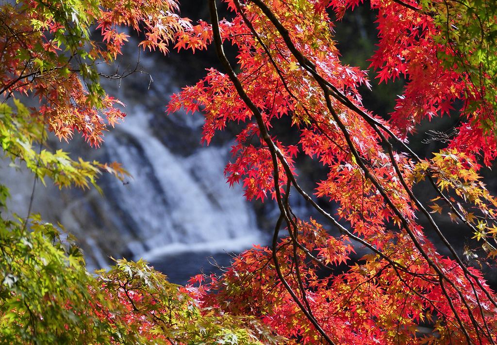 渓谷の自然をゆっくりと観賞頂けます。