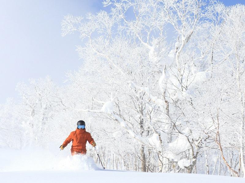 ≪未圧雪コースでパウダー満喫!≫最大37コースを滑り放題!<Br>コースのオープン状況は公式HPをご確認ください。