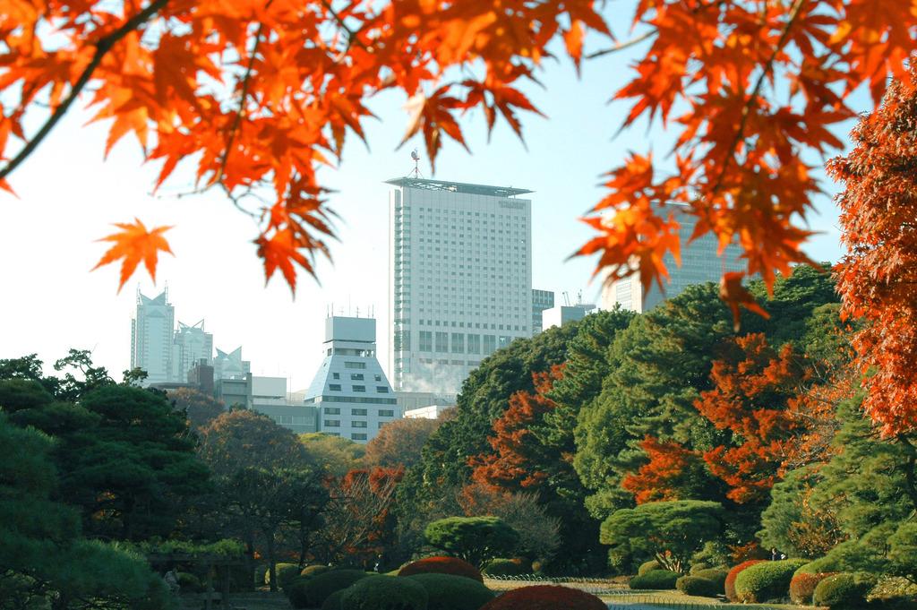 サザンタワーを拠点に秋の散歩へお出かけください(秋の新宿御苑より望むホテル)