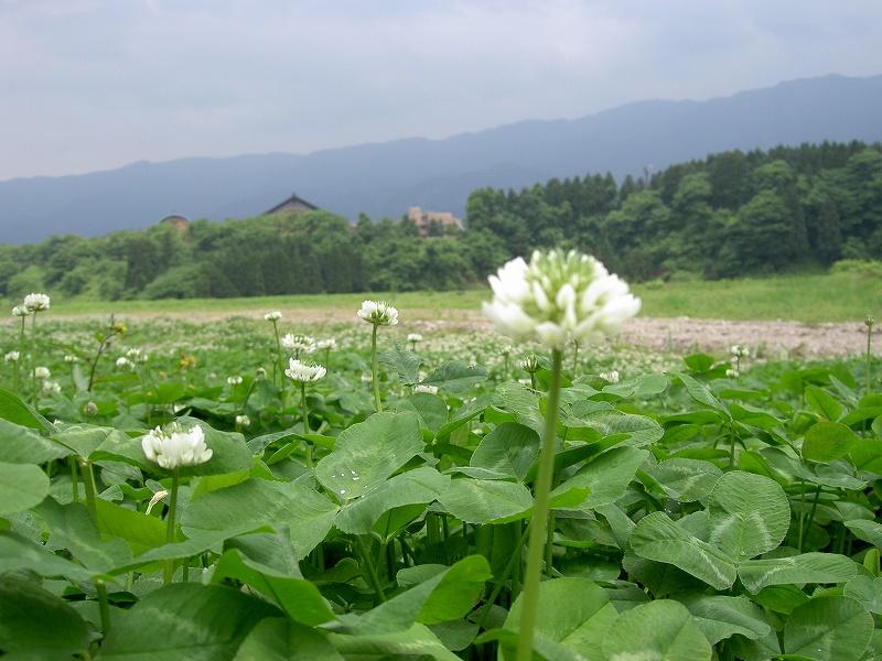 里山の美しい景色を楽しむ・・・