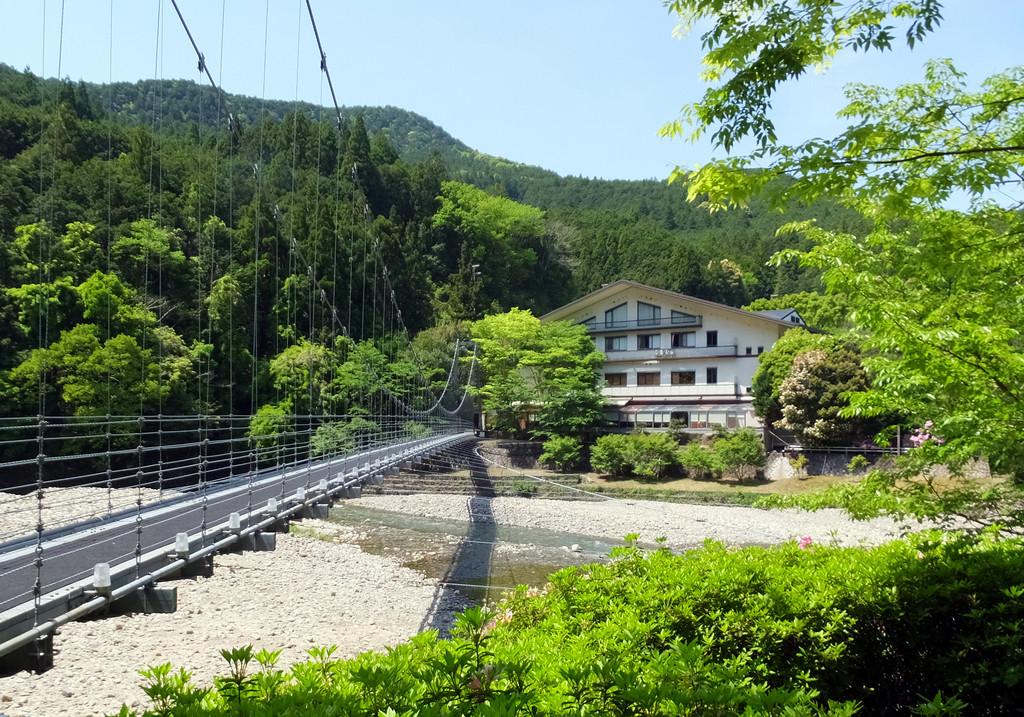 新緑のやまゆりと吊橋