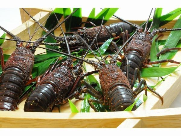 千葉の伊勢海老は、日本でも有数の漁獲高を誇ります。