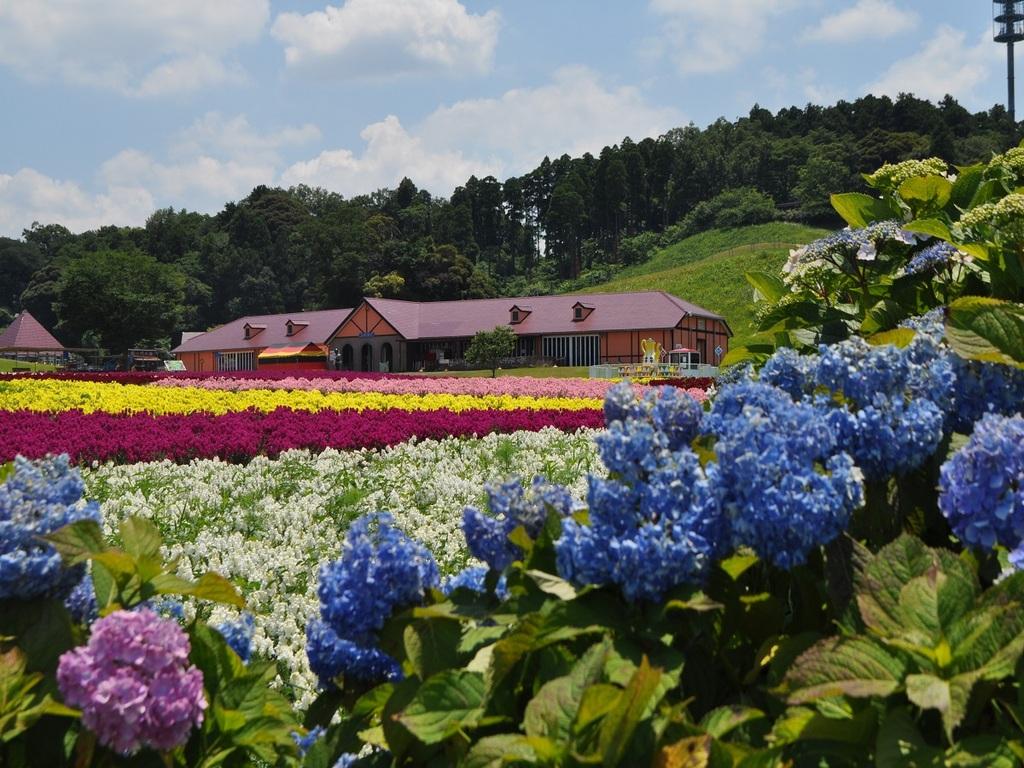 【11月1日〜】関東三大イルミ♪ドイツ村を思いっきりお楽しみ下さい。