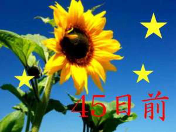 ◆45日前◆【ナツトク!】早めの予約だからおトク★夏先取りでステキなステイを...