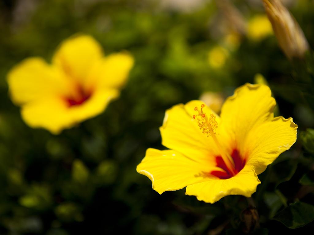 島に咲く花のように・・・心なごみ癒される海辺のホテル「島花」